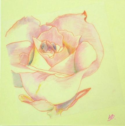 色鉛筆 バラを描く.png
